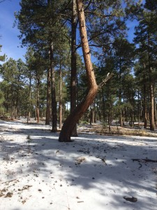 SOLD OUT Guided Hike - Ute Indian Prayer Trees @ Fox Run Regional Park   Colorado Springs   Colorado   United States