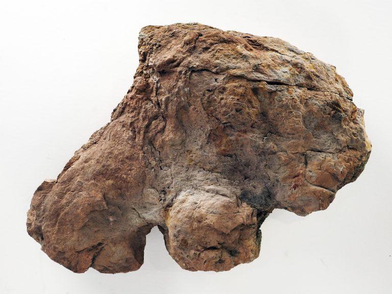 Ankylosaur Trace Fossil, Sandstone Track Cast, Early Cretaceous. CSPM Collection, 2008.33.5.