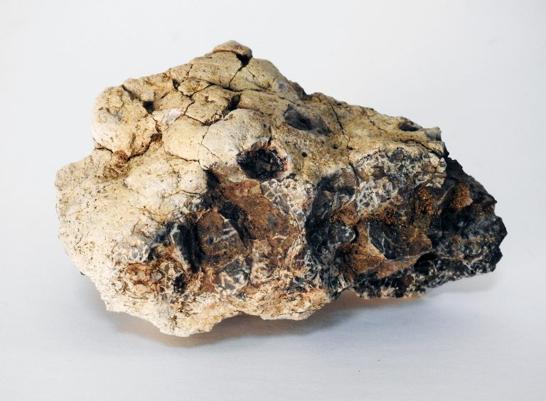 Fossil Concretion from Corral Bluffs Open Space, Cretaceous-Paleogene Period, CSPM Collection, 2020.24.1.
