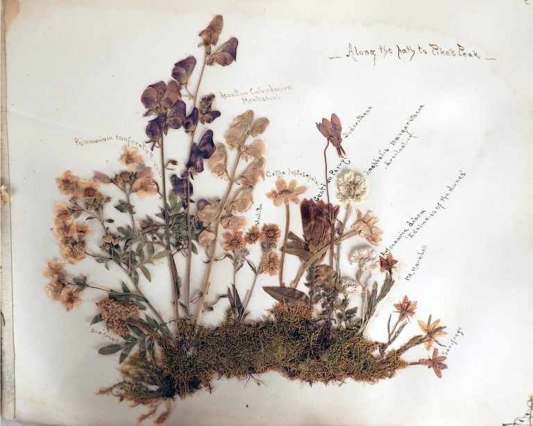 Pikes Peak Wildflower Album Presented by General Palmer to donor, 1906. Generously Donated by Mrs. Alma Ehrich Weil, A67-132.